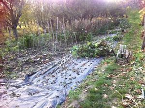 Postupná likvidácia rastliniek a príprava na jesennú orbu. Rozhodli sme sa aj rozšíriť pestovateľskú plochu, čiže som s rodinou v štádiu plnánovania ako zúrodniť viac zeme