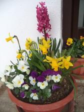 Jaro 2018 ..teď nám dělají radost u dveří, které vedou na náš dvorek, příští rok budou nastěhované na zahrádce ;-)