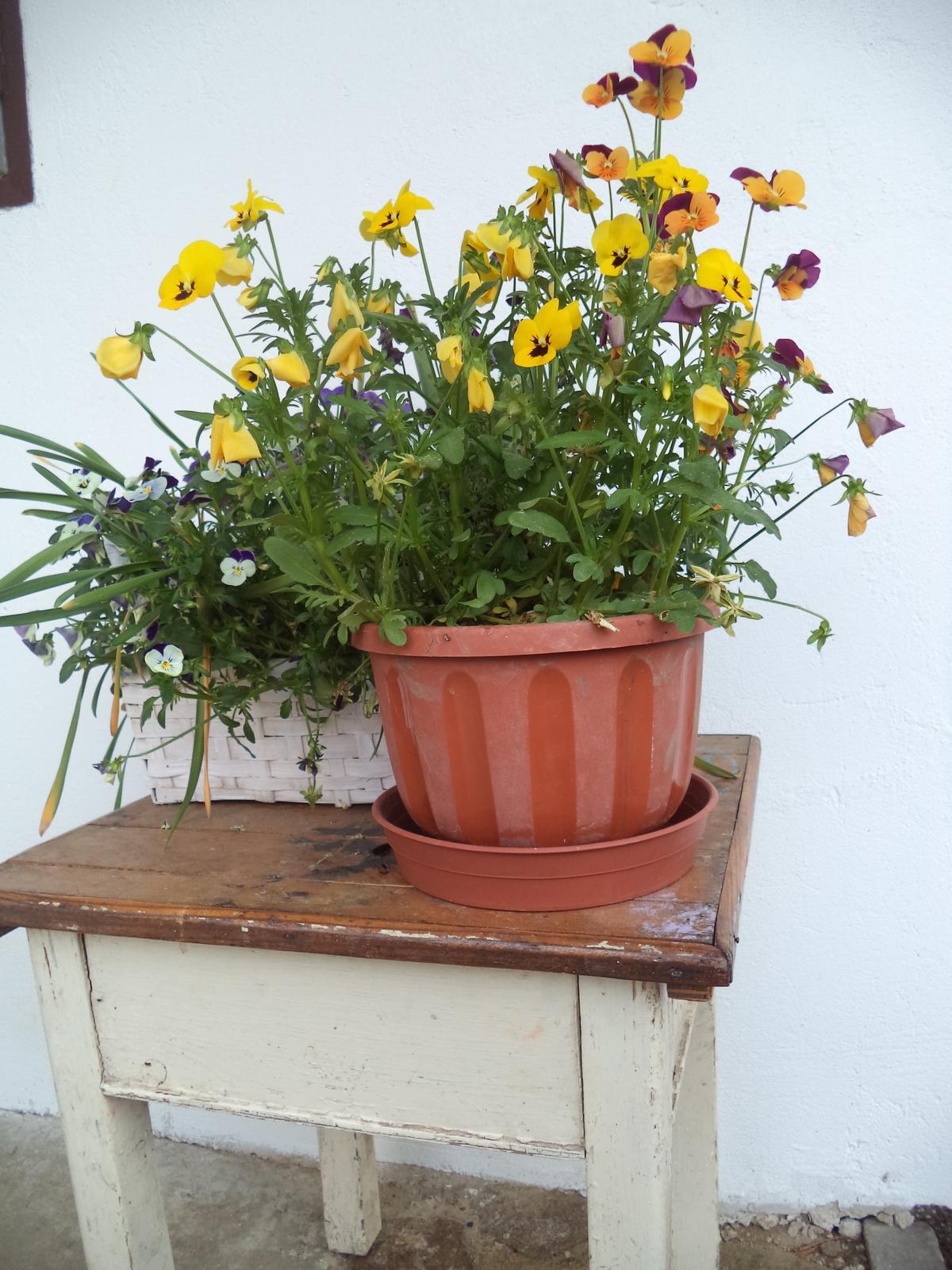 Zahrádkové - ...tak už vím, kam dám tyhle přerostlé z květináčů, kde na ně pere slunce ;-)