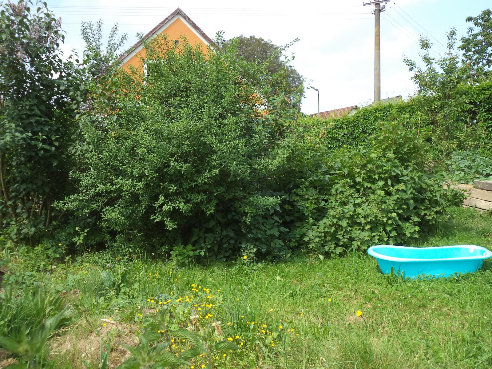 Zahrádkové - Za keříky je kompost... (vana je tam dočasně na zalévání, protože hadice nám nedosáhne všude)