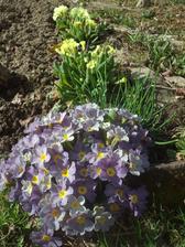 ..dnes mi v zahradnictví při koupi velkokvětých prodavačka řekla, ať je přihnojuji, aby květy zůstaly velké..no jestli mají bez přihnojení vypadat takto (záplava malých květů), pak budu moc ráda ;-)