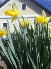 ...já tu jarní záplavu květů prostě miluju!...