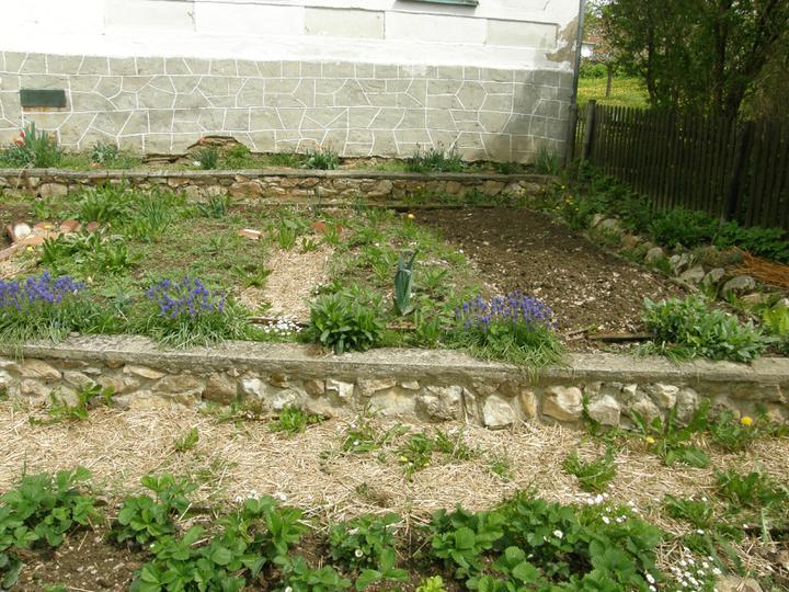 Moje zahrádkové potěšení - květen 2010 - zahrádečku tvoří dvě terásky
