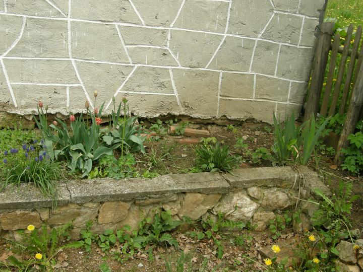 Moje zahrádkové potěšení - květene 2010 - je hodně suchý...ale plevelu se daří všude a pořád a hodně dobře :-(