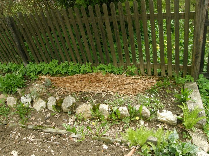 Moje zahrádkové potěšení - květen 2010 - zamulčované fazolky, myslela jsem jak se budou plazit po plůtku, ale ani nevzešly :-)