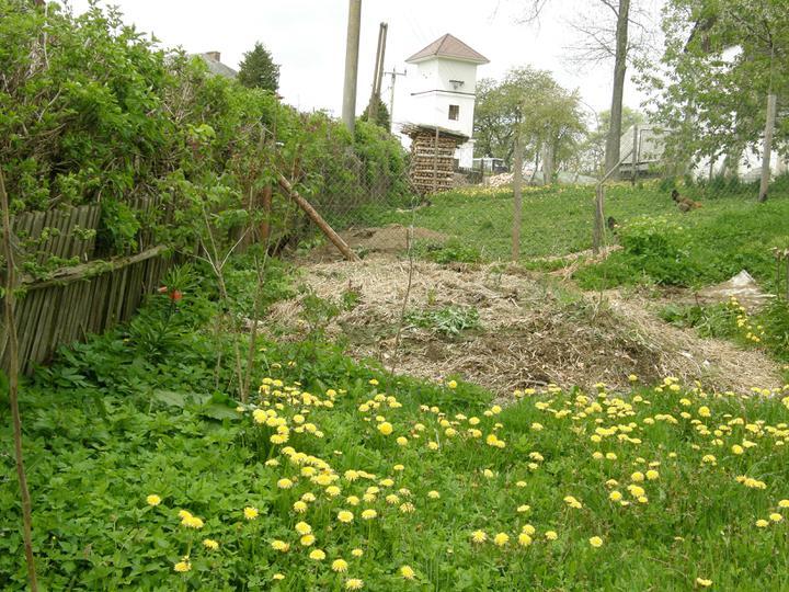 Moje zahrádkové potěšení - květen 2010 - náš megahnusný kompost... (mám od manžela slíbeno, že ho zkulturní, začal aspoň okolo něj dávat keříčky..)