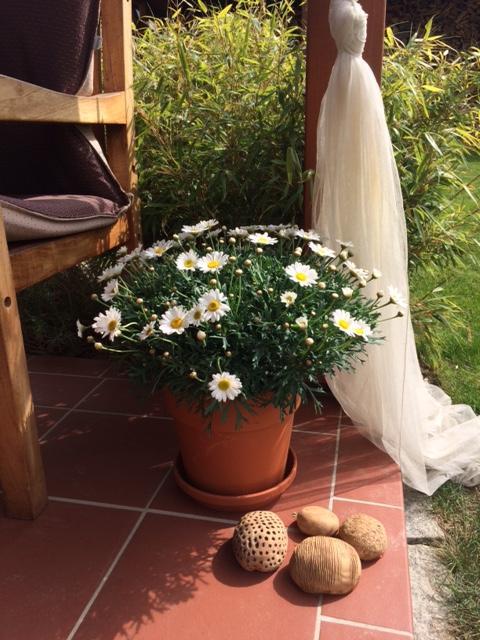 ...Naše zahrada... - Obrázek č. 4