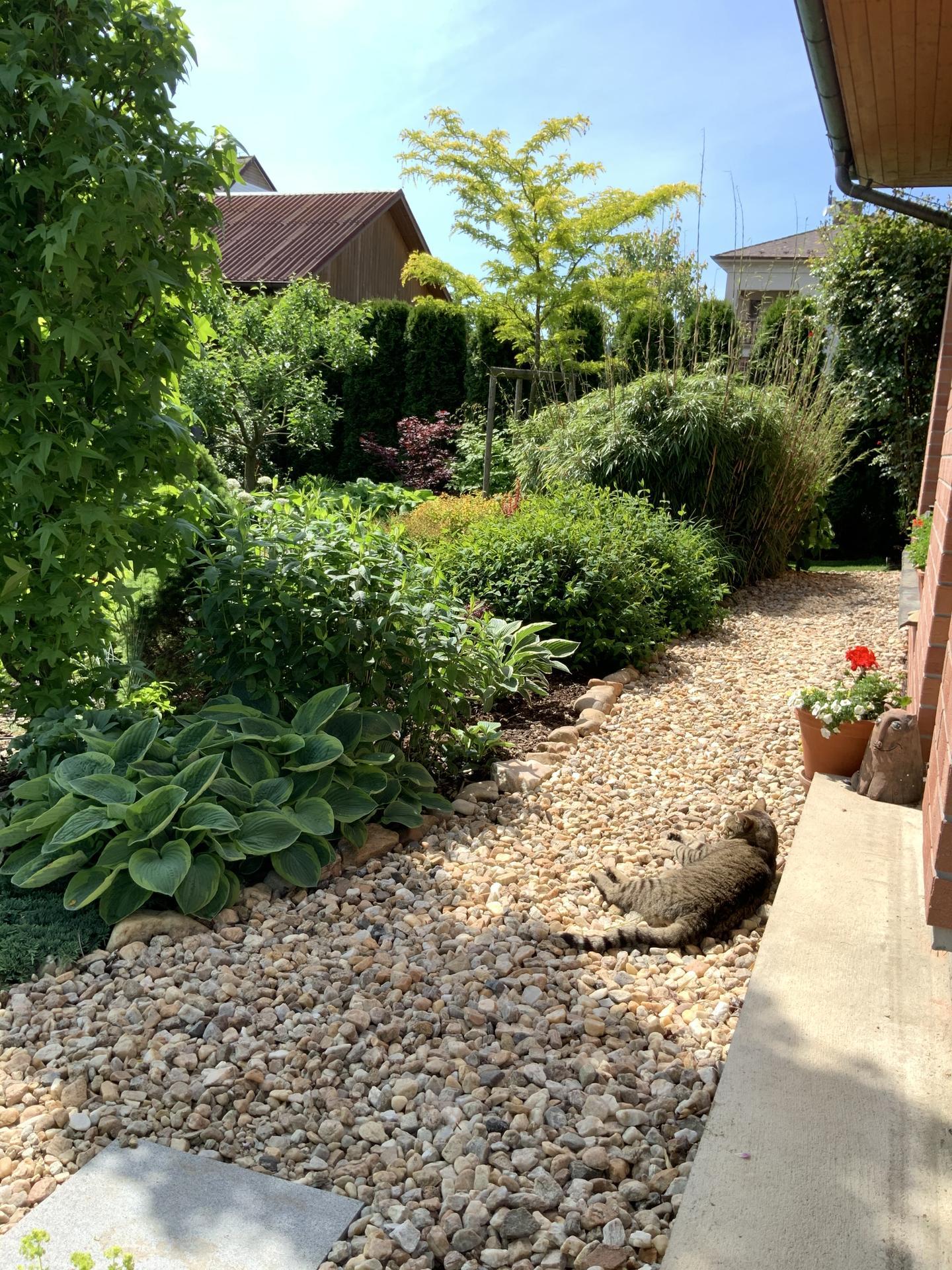 ...Naše zahrada... - Obrázek č. 5