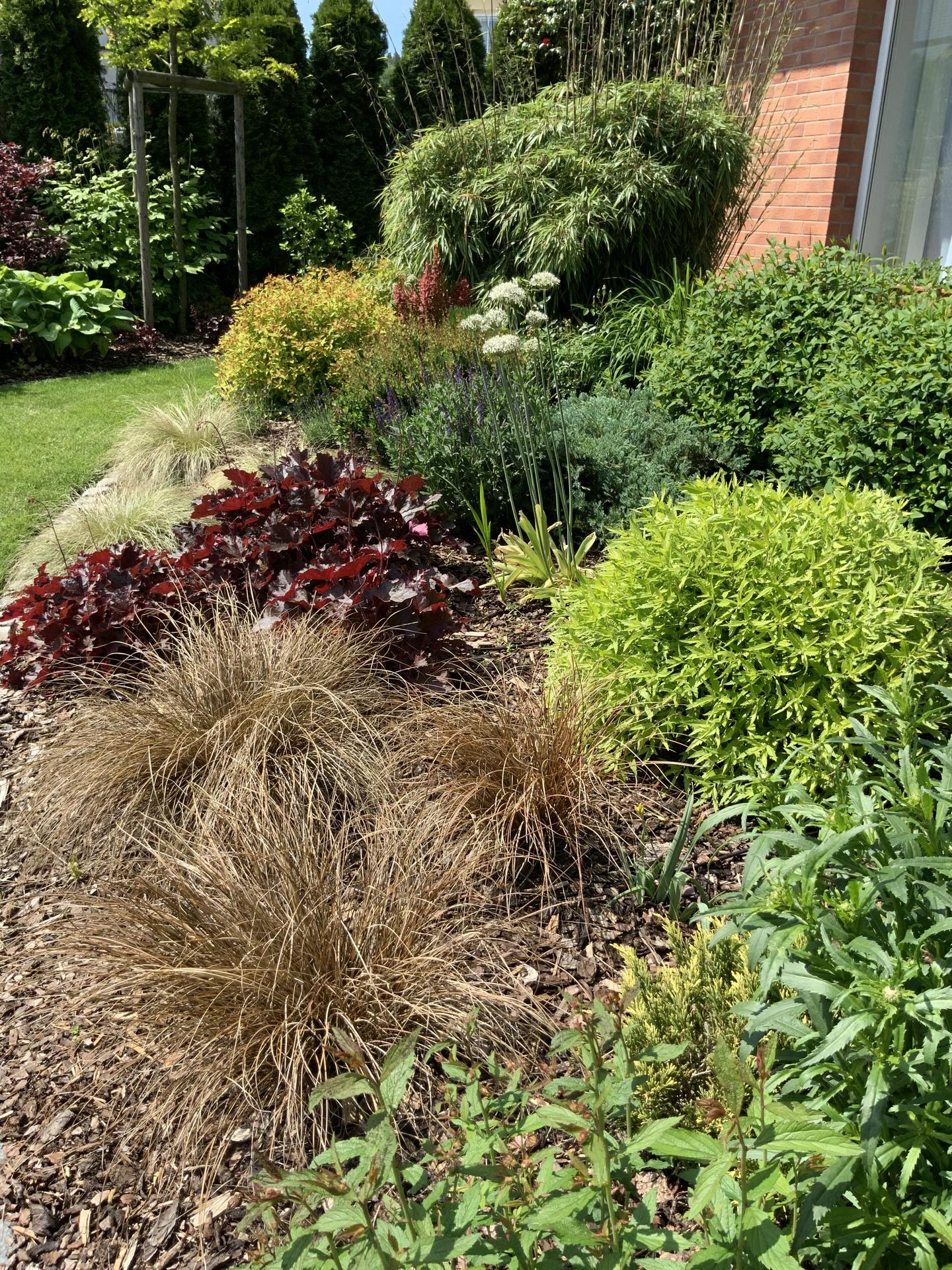 ...Naše zahrada... - Obrázek č. 7