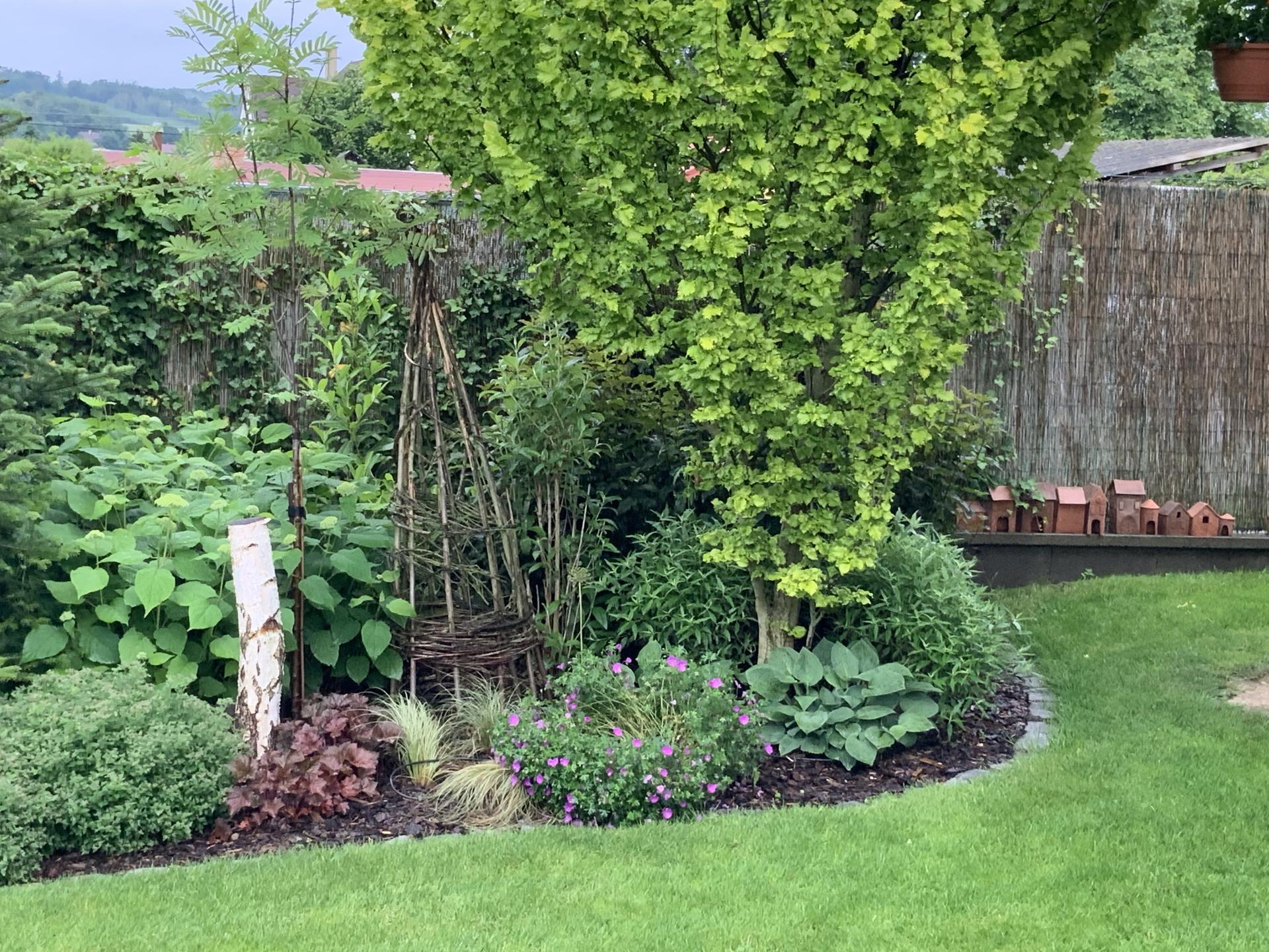 ...Naše zahrada... - Obrázek č. 11