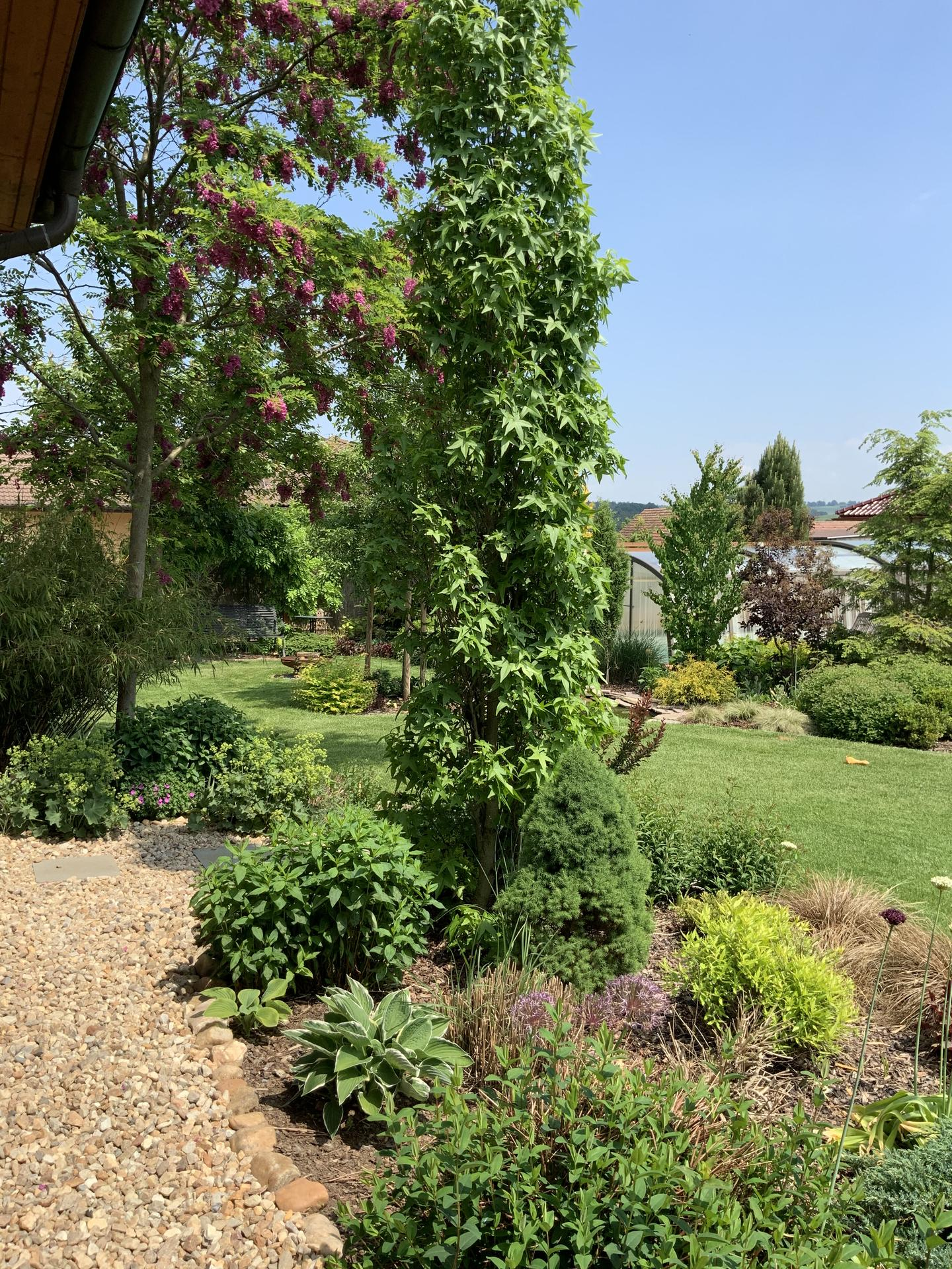 ...Naše zahrada... - Obrázek č. 20