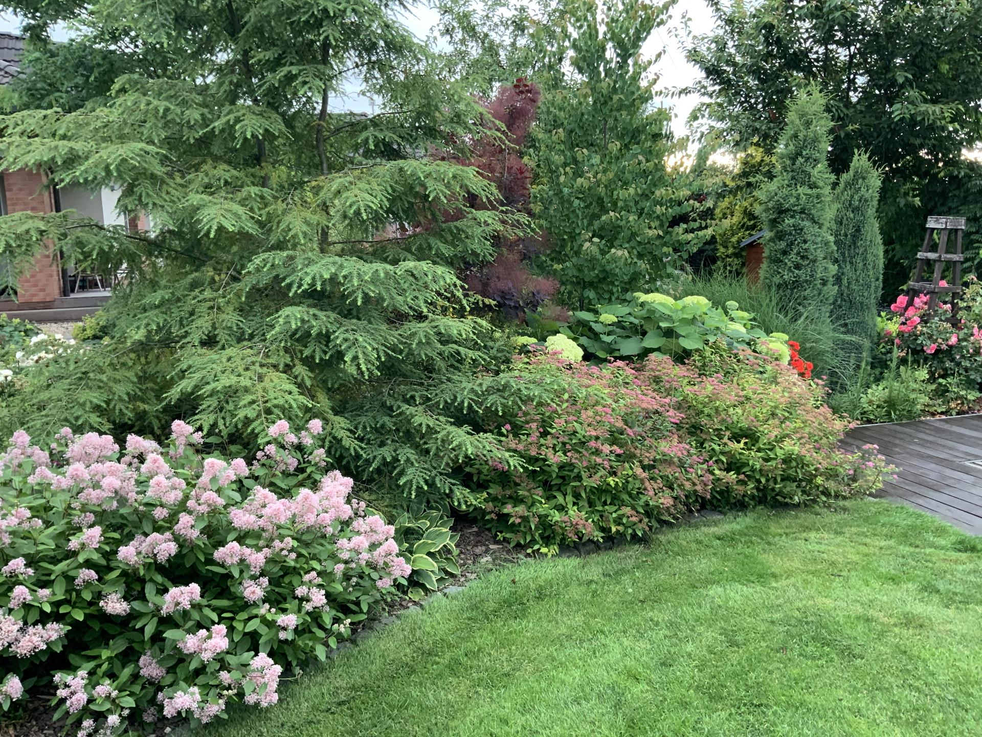...Naše zahrada... - Obrázek č. 42