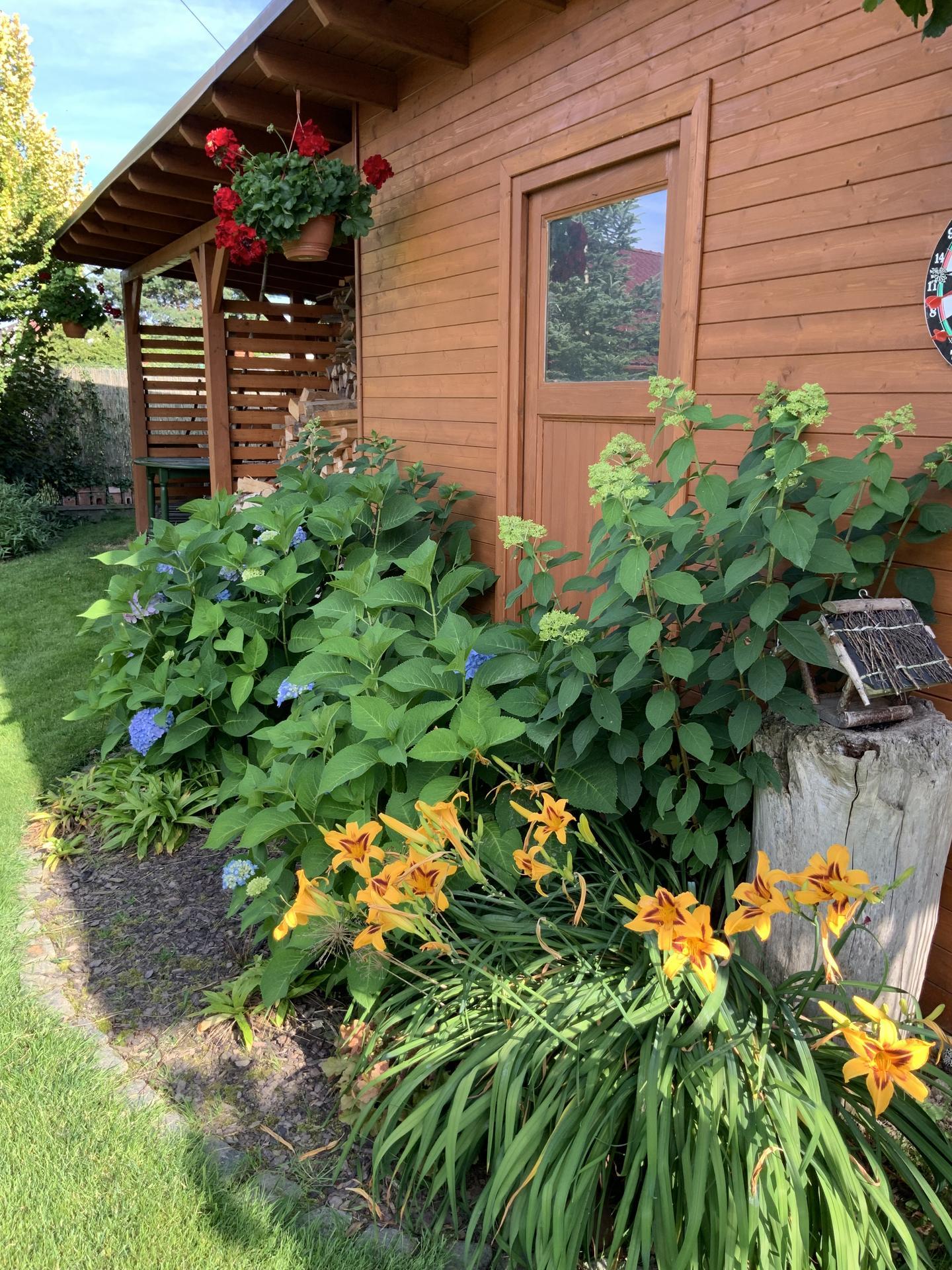 ...Naše zahrada... - Obrázek č. 51
