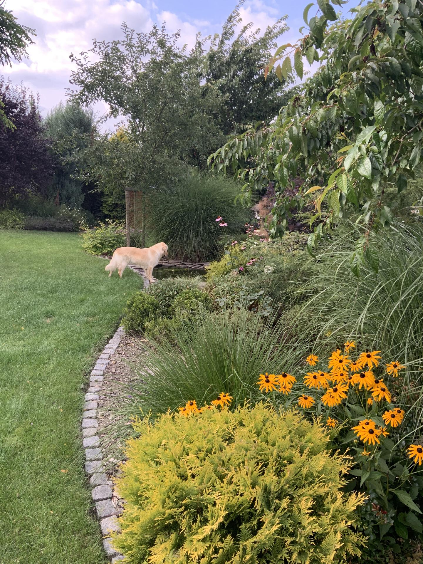 ...Naše zahrada... - Obrázek č. 59