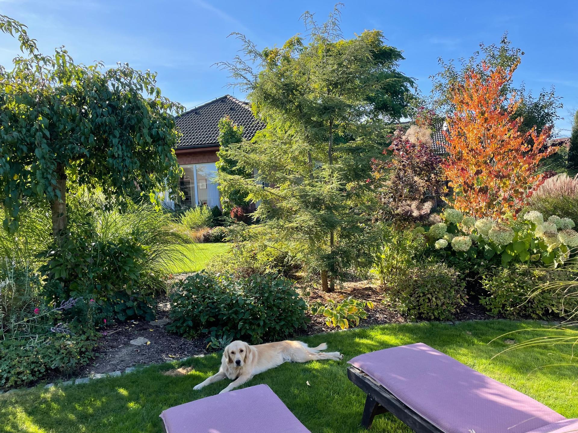 ...Naše zahrada... - …Krásný podzimní den 🍁☀️🌳🐕…