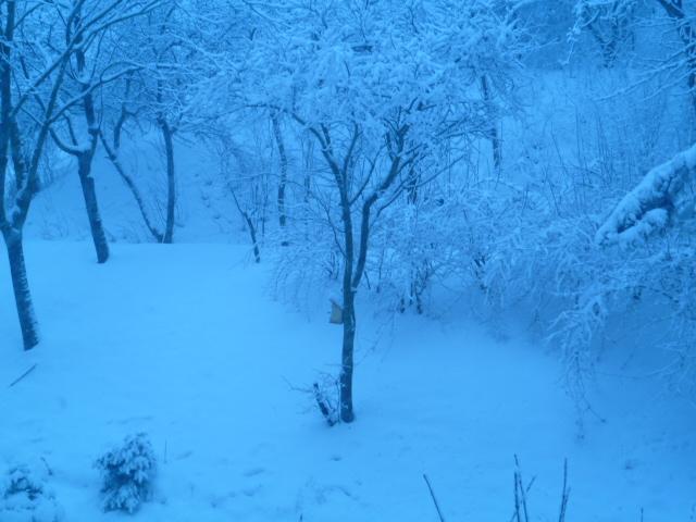 Aj takéto môže byť v Bratislave prebudenie - Obrázok č. 2