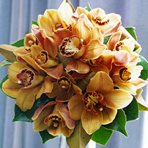 krásna farba orchideí