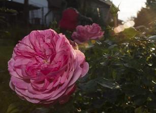 Leonardo da Vinci a jeho ušlechtilý květ