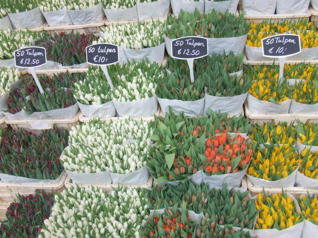 Lucka a Maťko - tulipany v Amsterdame na kvetinovom trhu...laska na prvy pohlad