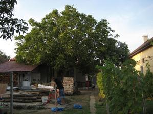 priprava starych driev na zimu do kachli,vsetko zvysne drevo sa skury v zime.