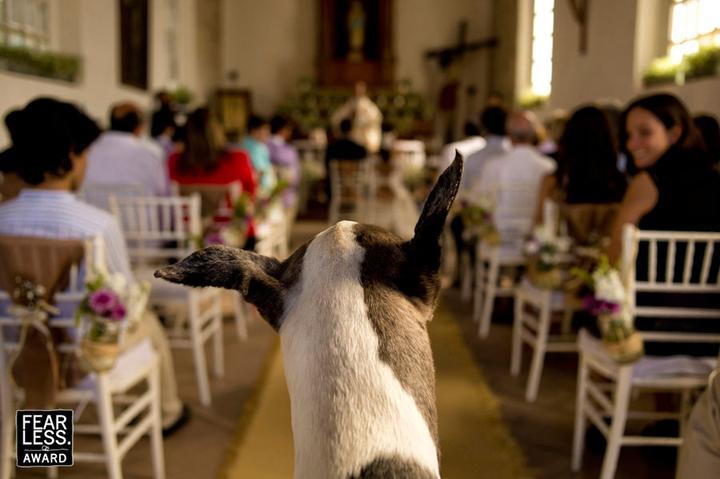 Miláčkové na svatbě :-) - To by ten náš zvládl :-* on umí čučet jako puk :-D