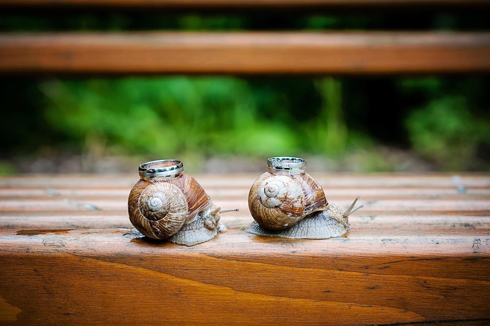 Svatební fotky - inspirace - Obrázek č. 5