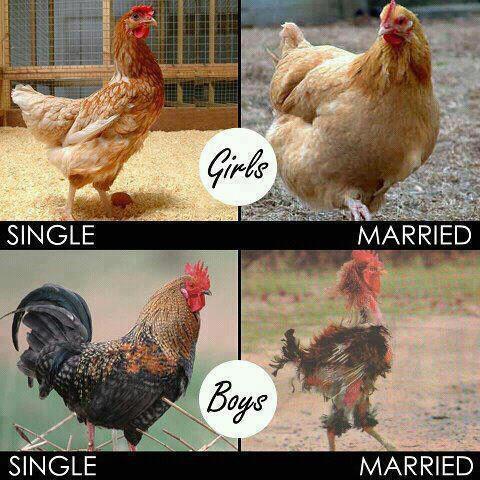 Vtípky o svatbě, manželství, muži vs. ženy - Obrázek č. 23