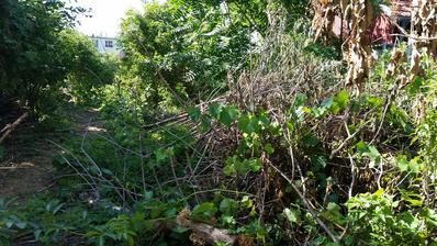 Pôvodný stav zahrada