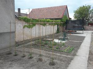 a aj provizórna zahradka pre tento rok začína kvitnúť
