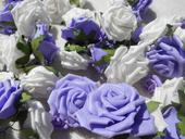 Fialové a bílé růžičky,