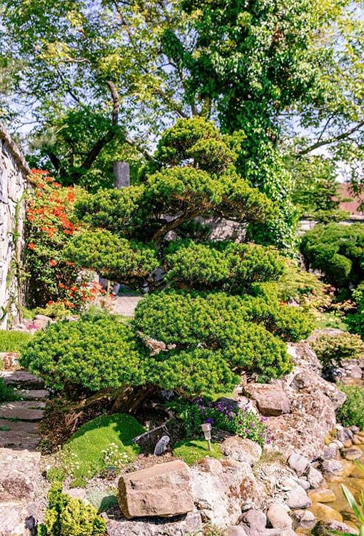 Súťaž Moja záhrada 2021 - Zvolen - Obrázok č. 2