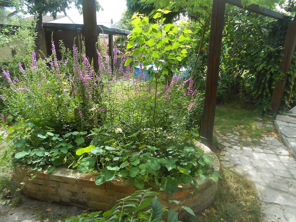 Súťaž Moja záhrada 2021 - Svätý Jur - Obrázok č. 3