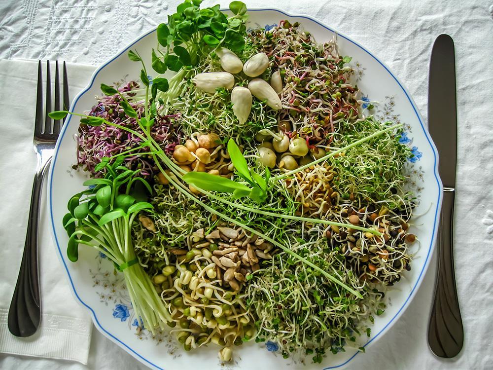 Ako spotrebovať dary záhrady/ Recepty zo záhrady - Mikrobylinky, foto: iStock.com, viac čítajte tu: https://www.zahrada.sk/magazine/vypestujte-si-mikrobylinky-su-zdrojom-vitaminov-pocas-zimnych-dni