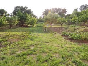 takto vyzerala zahrada pred rekonstrukciou...