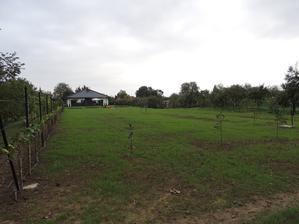 trava zasiata september 2015