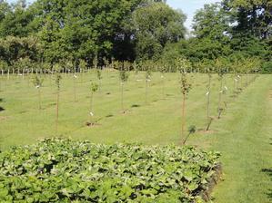 zvysok zahrady vysadba stromov kazdeho druhu