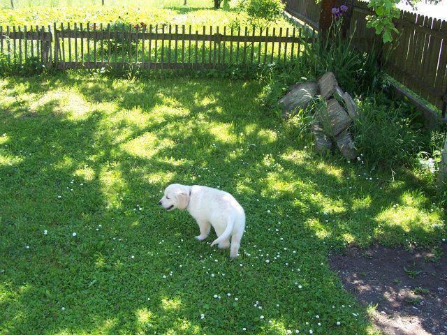 Kačenka a Zdenda (Brandejsovi) 7.7. 2007 - 19.5. jsme si domů přivezli naše mimi...