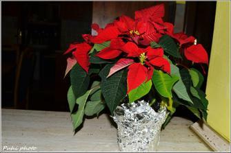 vianočná ruža nesmie chýbať :)