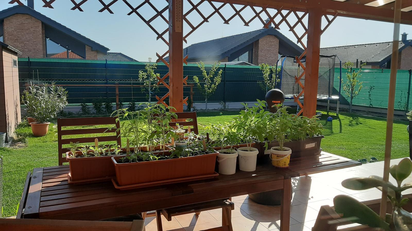 🏠🌞🌺❤🌷 Zahrada a jej dalsi rok...2020 🌱🐞🐛🦋🍓🥕🍅🌺❤ - 23.4.2020....letnim paradajky.