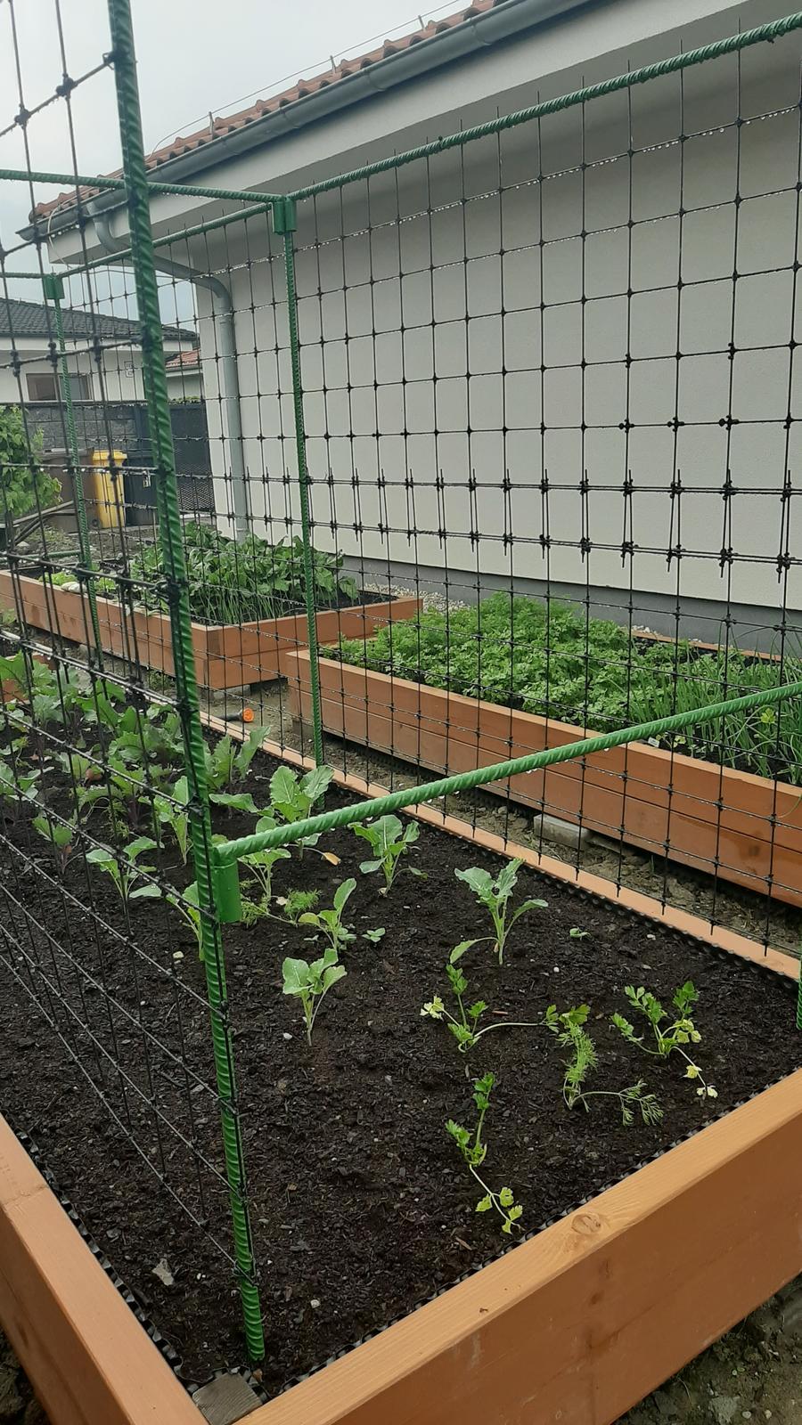 🏠🌞🌺❤🌷 Zahrada a jej dalsi rok...2020 🌱🐞🐛🦋🍓🥕🍅🌺❤ - Manzel vyrobil klietku na uhorky 😁