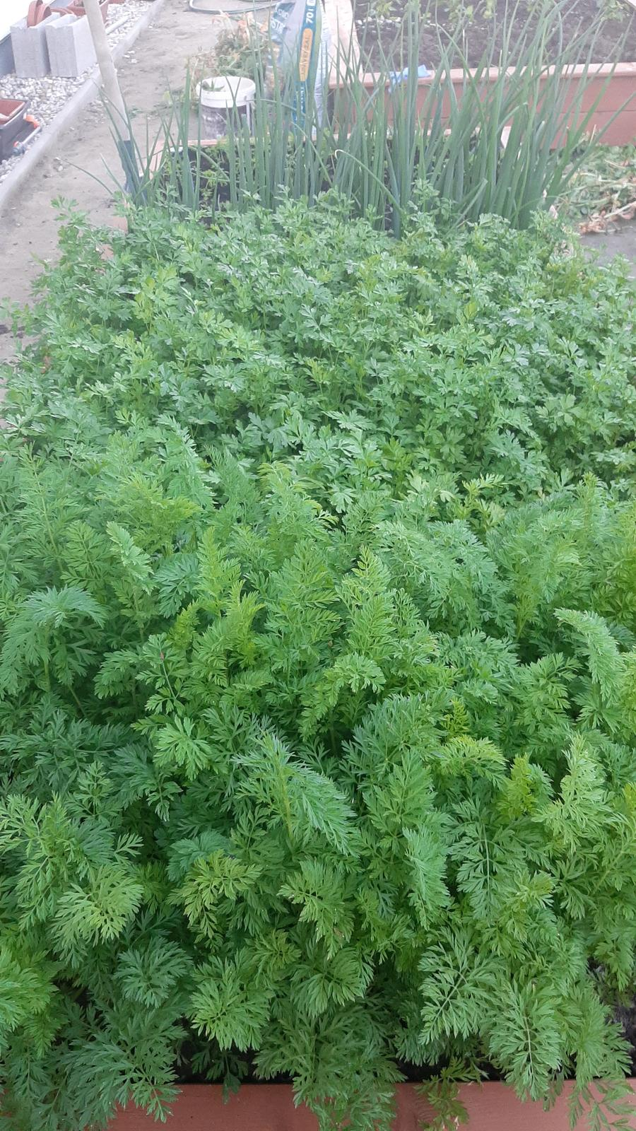 🏠🌞🌺❤🌷 Zahrada a jej dalsi rok...2020 🌱🐞🐛🦋🍓🥕🍅🌺❤ - Zelena dzungla.