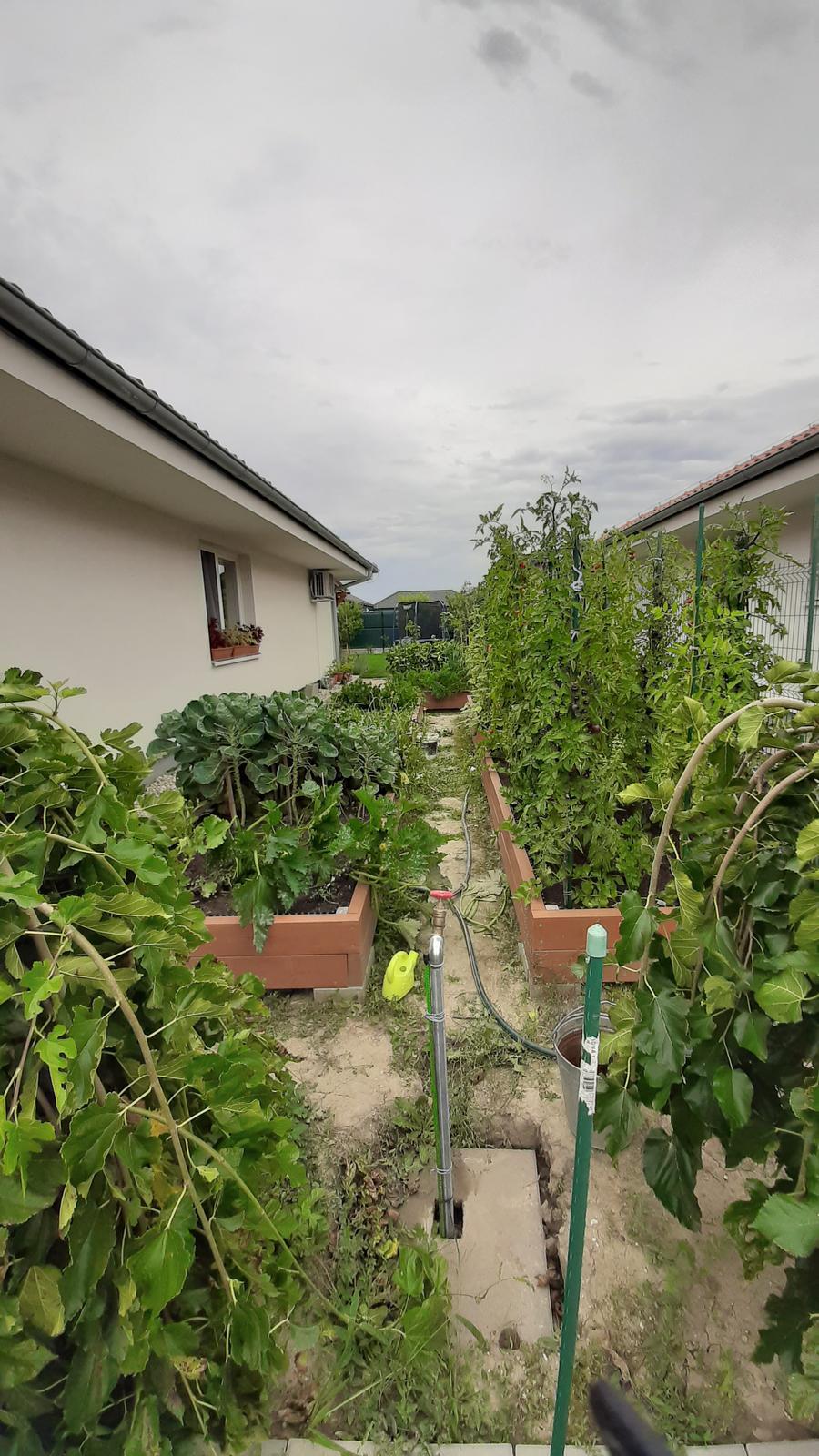 🏠🌞🌺❤🌷 Zahrada a jej dalsi rok...2020 🌱🐞🐛🦋🍓🥕🍅🌺❤ - Zahony a pohlad do zahrady...