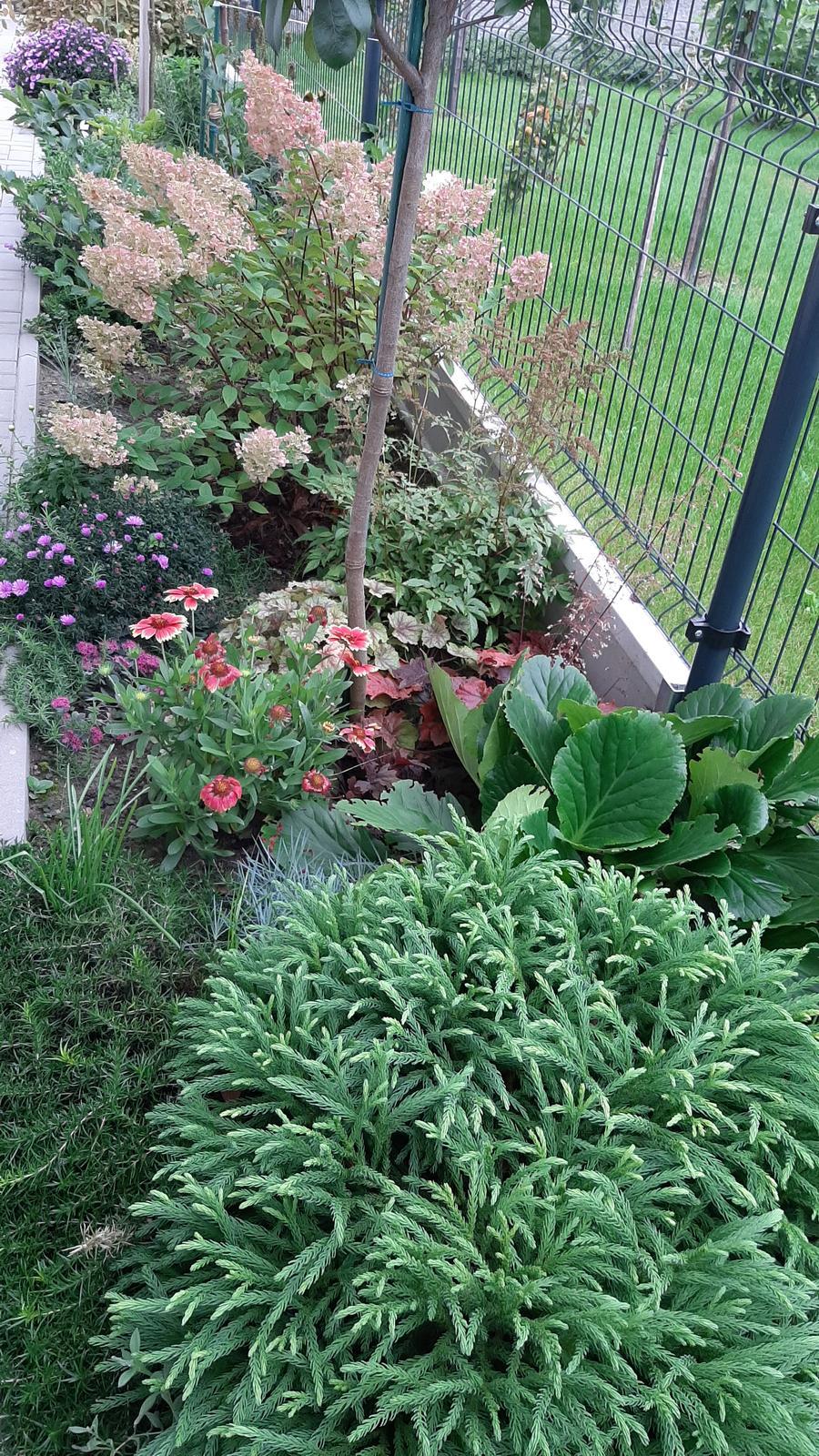 🏠🌞🌺❤🌷 Zahrada a jej dalsi rok...2020 🌱🐞🐛🦋🍓🥕🍅🌺❤ - Obrázok č. 494
