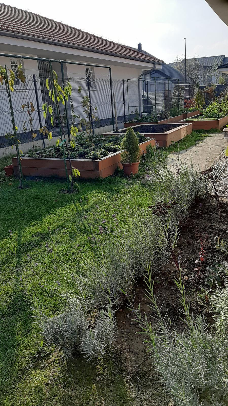 🏠🌞🌺❤🌷 Zahrada a jej dalsi rok...2020 🌱🐞🐛🦋🍓🥕🍅🌺❤ - Zahony uz skoro prazdne....
