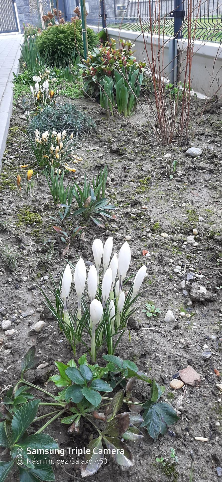 🏠🌞🌺❤🌷 Zahrada a jej dalsi rok...2020 🌱🐞🐛🦋🍓🥕🍅🌺❤ - V hline sa po zime objavilo milion kamenov...