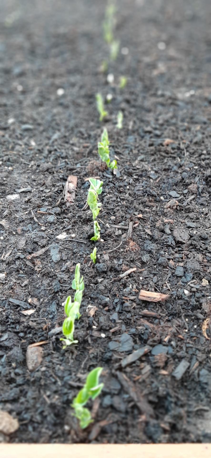 🏠🌞🌺❤🌷 Zahrada a jej dalsi rok...2020 🌱🐞🐛🦋🍓🥕🍅🌺❤ - Hrasok
