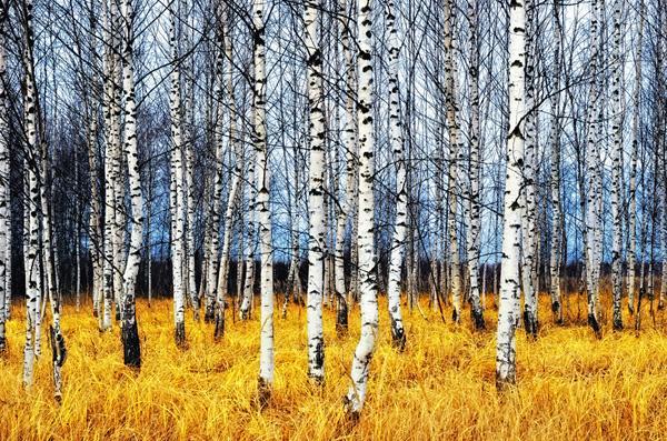 Stromy na tapetách - Obrázok č. 13