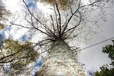 https://www.tapetymix.sk/fototapeta/fototapeta-tree-ft-5857769