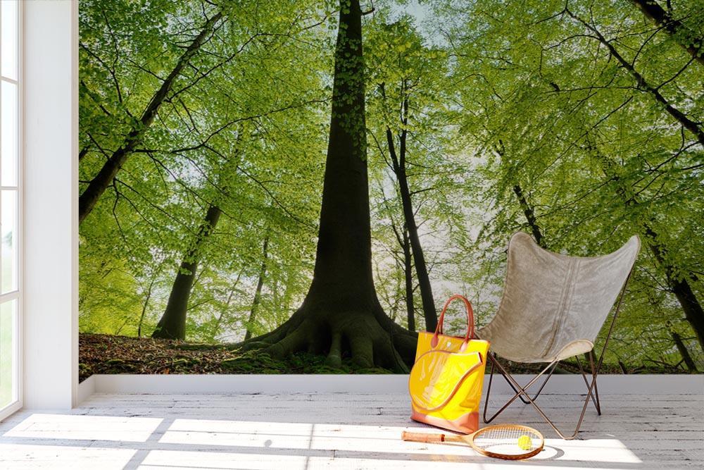 Stromy na tapetách - Obrázok č. 73