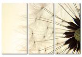 Zľava na Obraz Dandelion 60cm x 40cm - 3diely,